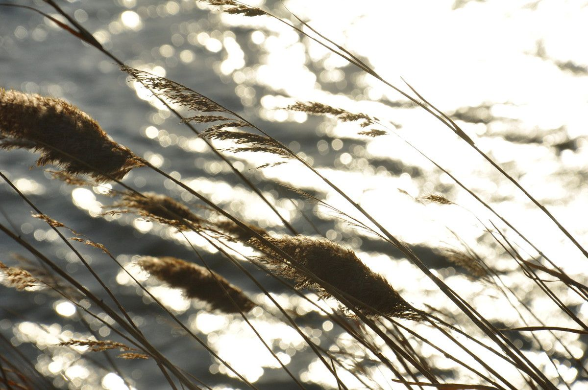 Herbes et mer au vent