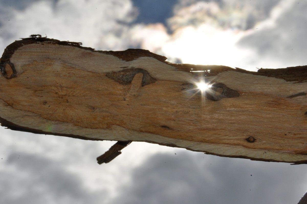 Soleil sur le bois de romarin.