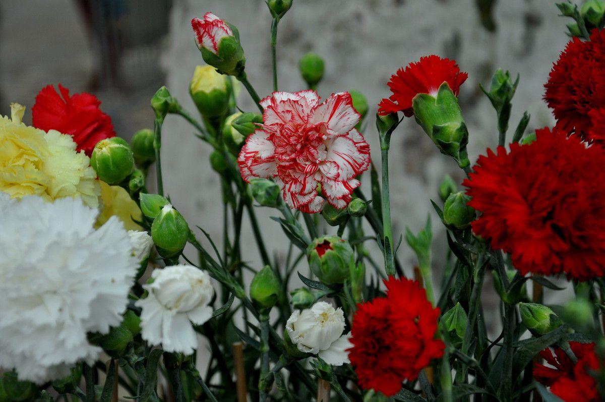 Des fleurs à vendre.