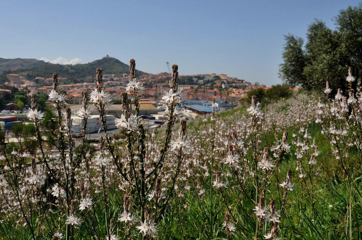 Port-Vendres est en face, les fleurs cachent l'Hermione mais pas la grue.