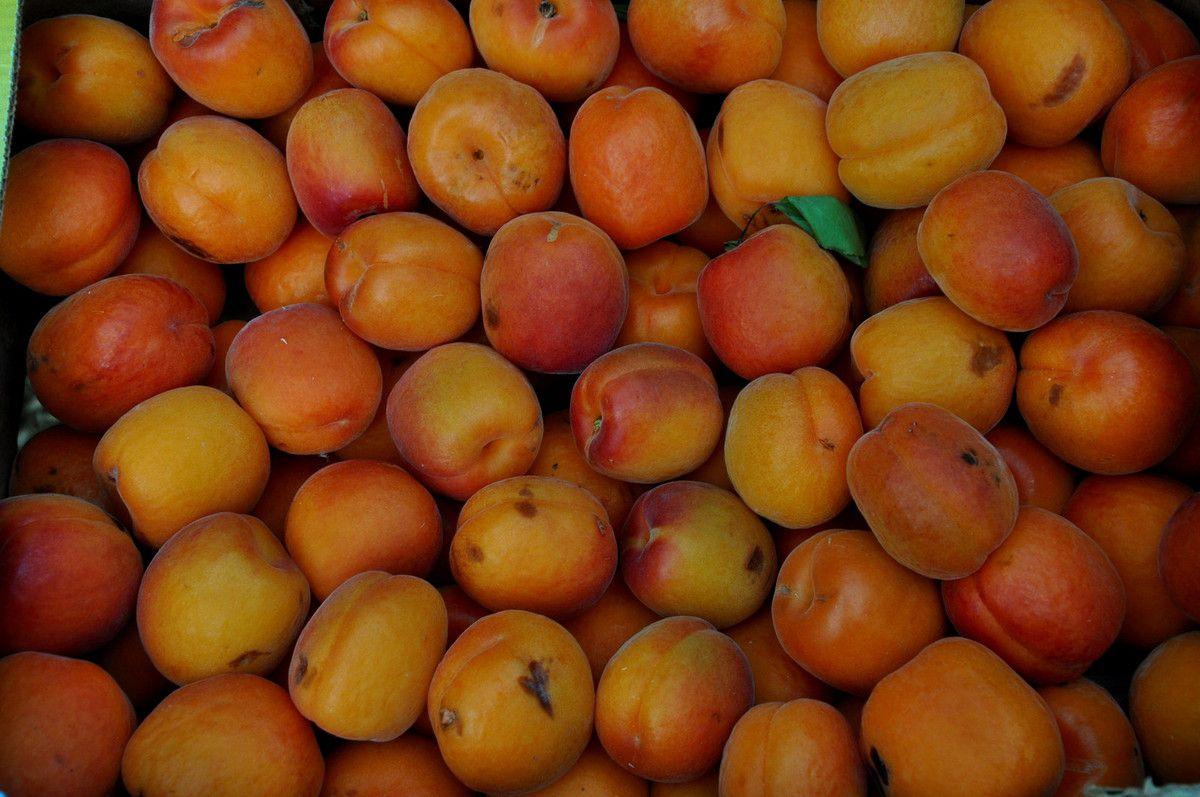 Les abricots du Roussillon.