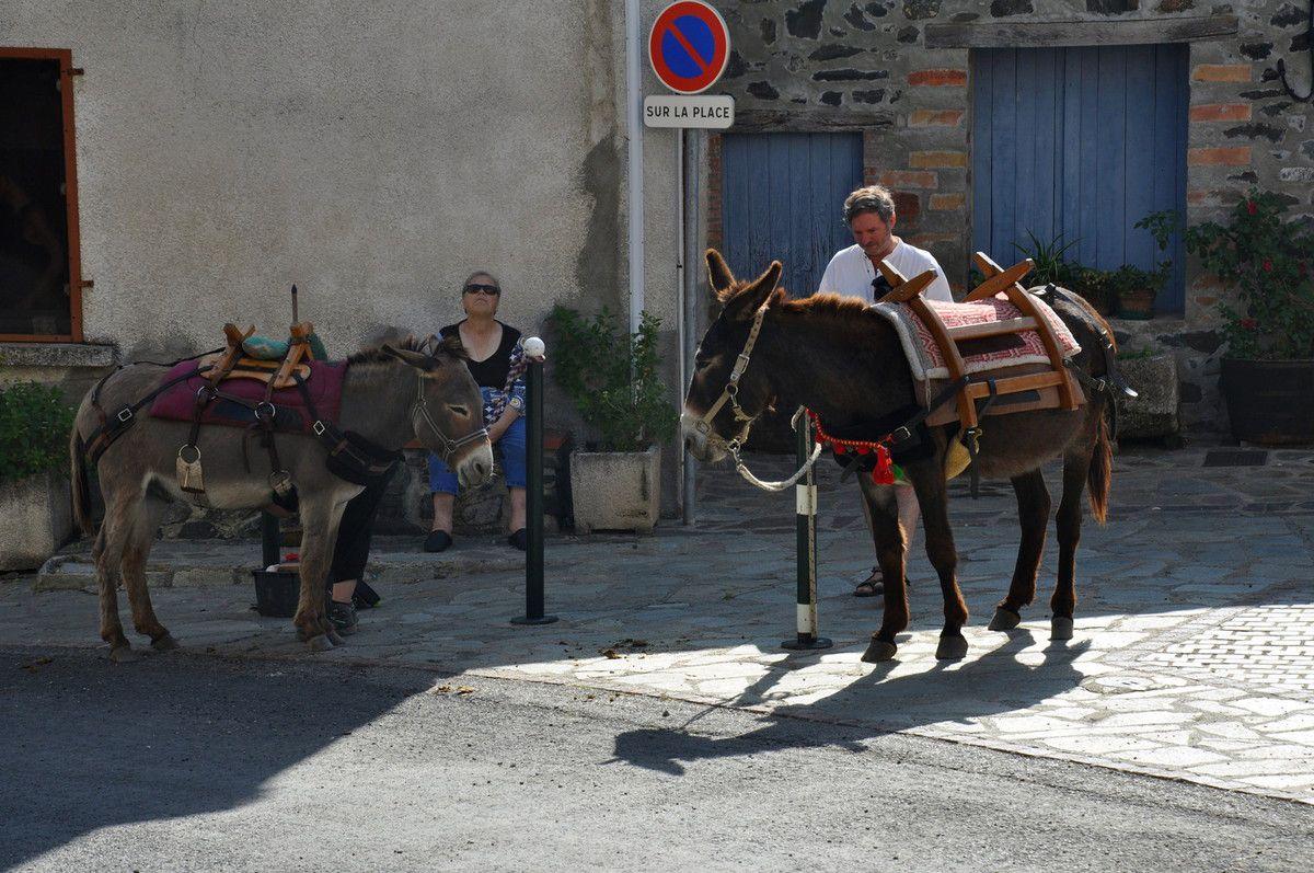 Les ânes de la balade
