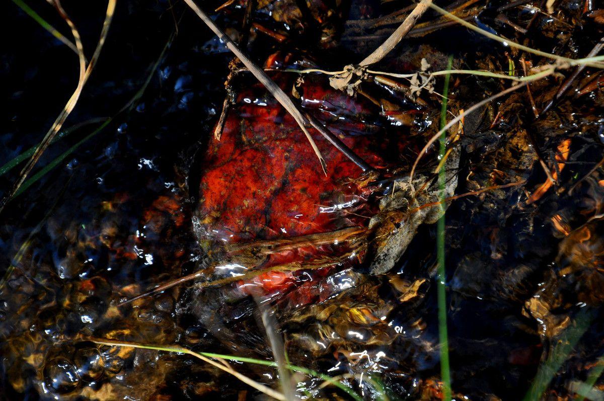 L'eau qui coule et les couleurs des racines.
