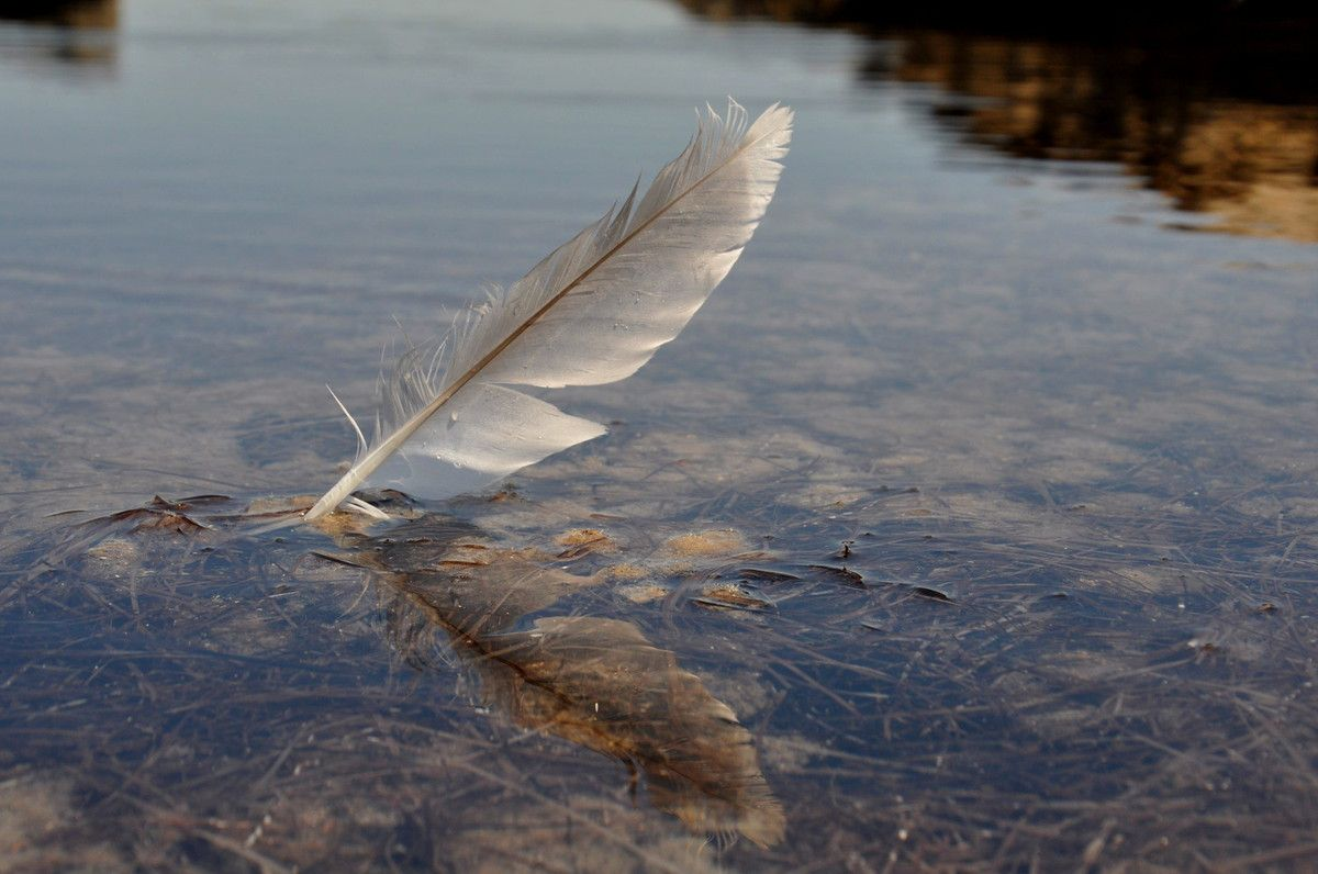 Une plume, deux plumes pour être photographiquement l'histoire du reportage