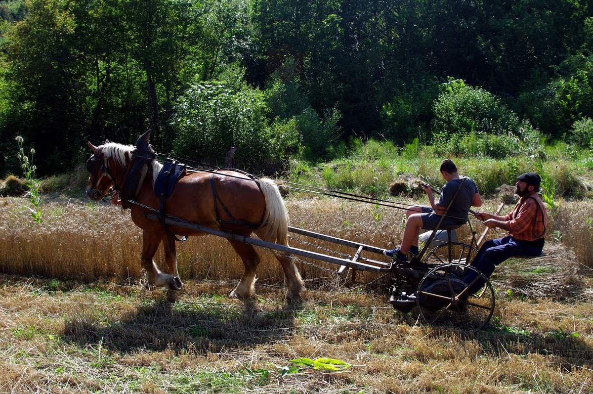 Toujours pour les blés