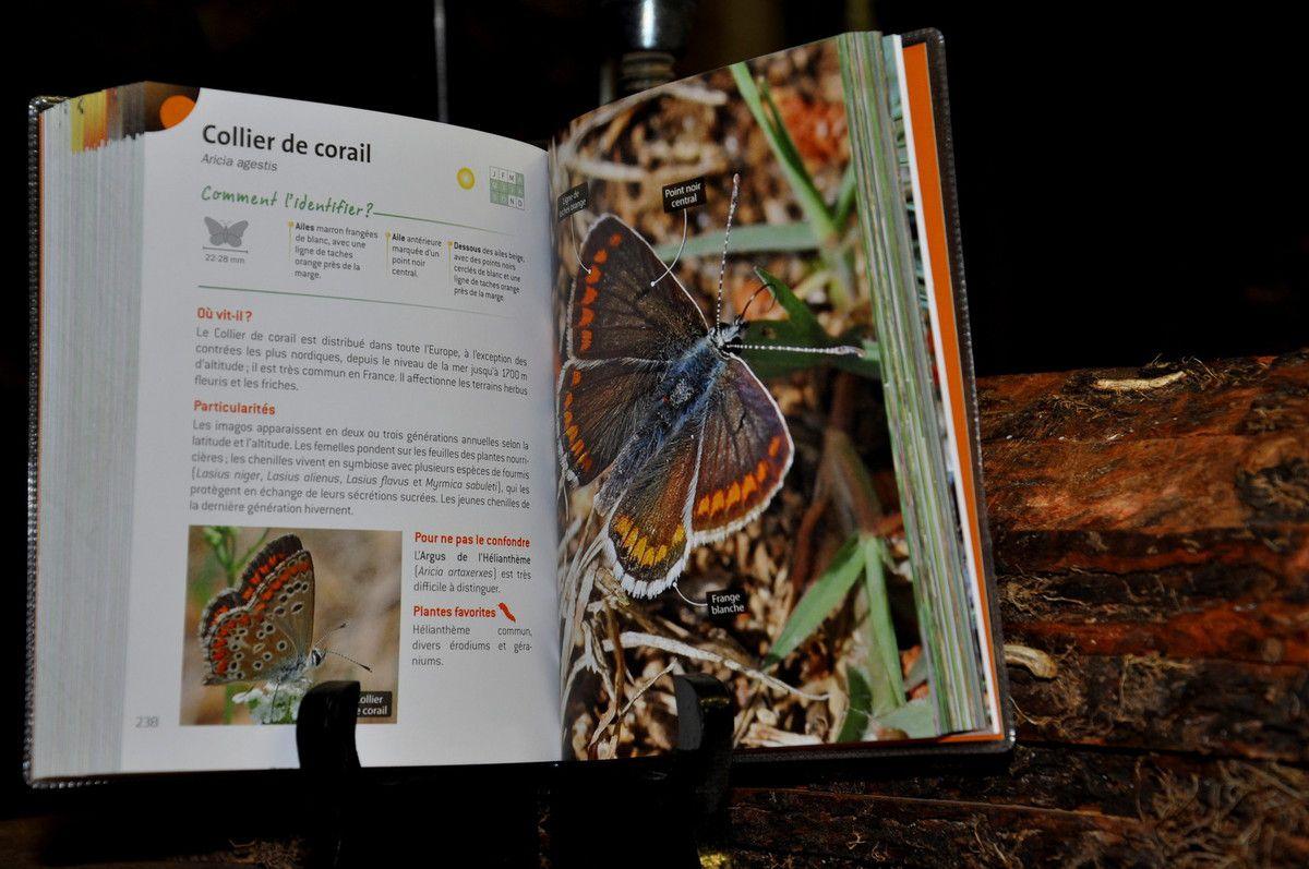 Le livre l'indispensable guide de l'amoureux des papillons
