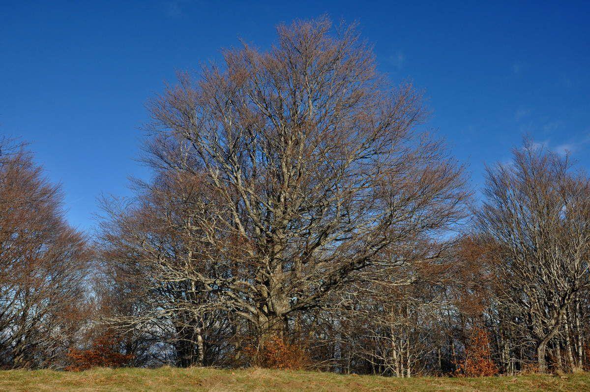 Deux arbres, deux visions de l'arbre comme j'aime.