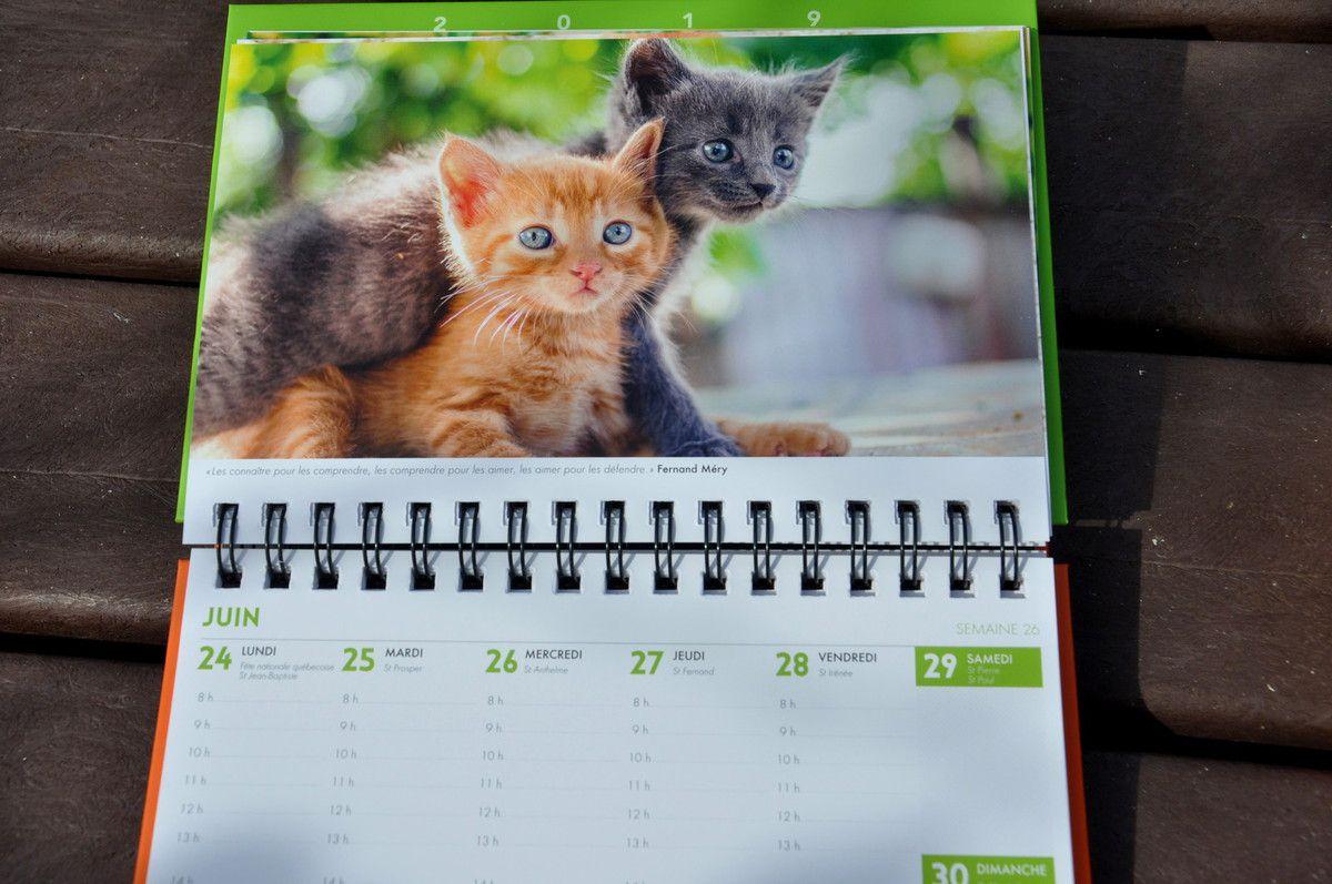 C'est chaque semaine un amour de chat à voir et à revoir, on a même envie de passer vite les semaines ou au contraire voir le futur.