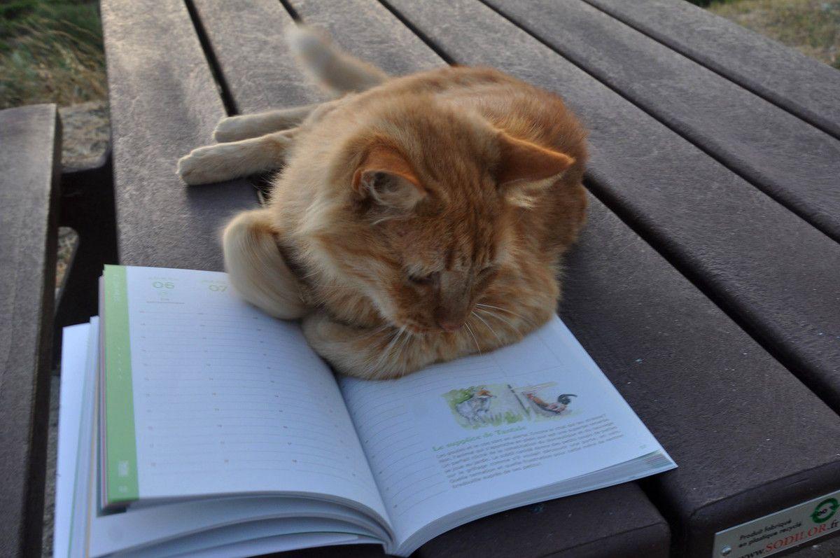 Dans l'histoire le chat ne stresse pas. Mois de mai le supplice de Tantale