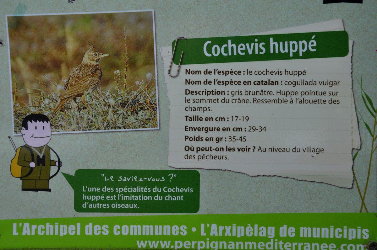 14 oiseaux sont en présentation, mais un 28 novembre par sur de tout pourvoir voir.