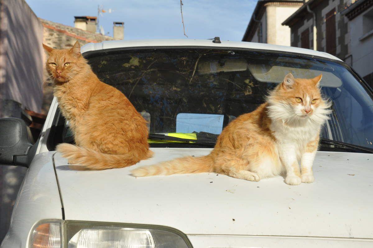 Deux gilets jaunes sur ma voiture !!!