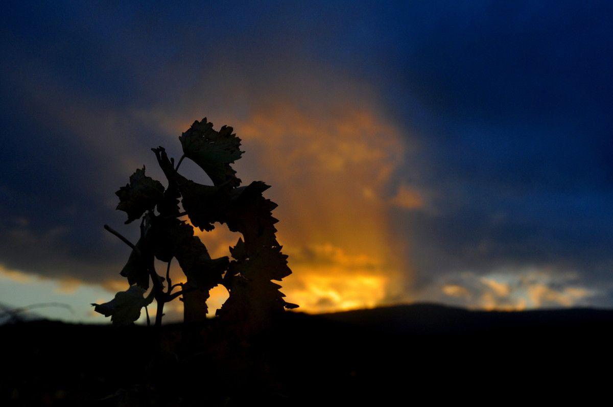 Après l'orage, la vigne aux couleurs du couchant.