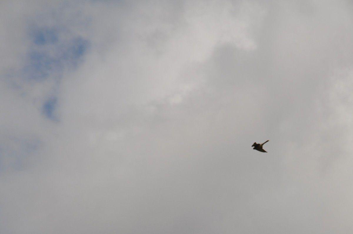 Dans les airs aussi, les oiseaux sont nombreux.