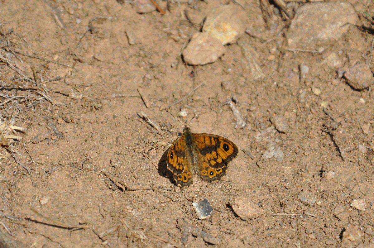 Ici la nature est très généreuse, pas facile de suivre les papillons si d'autres s'invite à mon objectif.