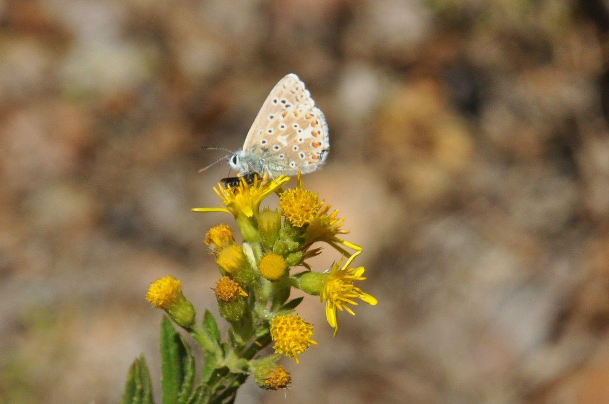 Ce papillon est une star devant l'objectif.