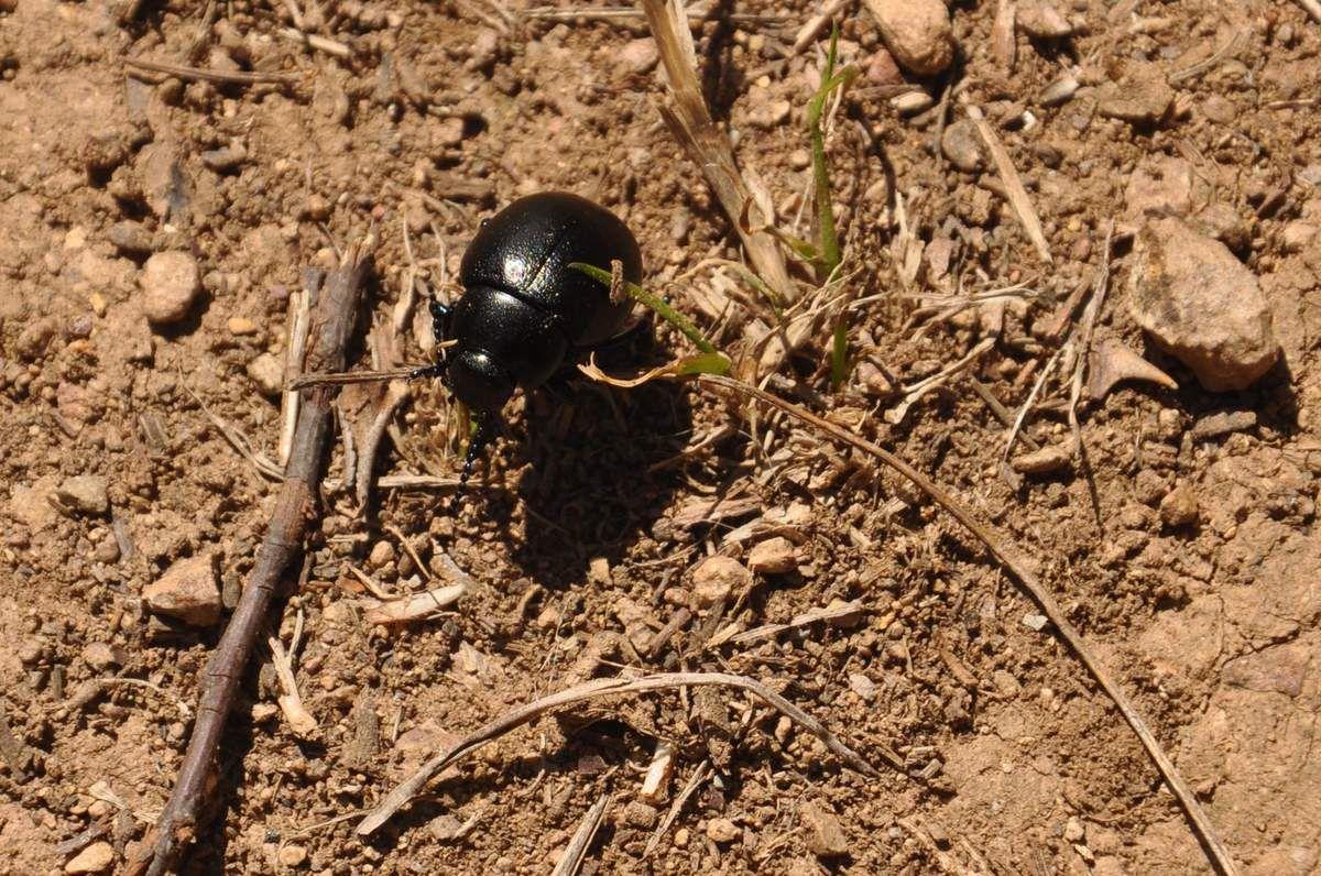 Un insecte passe.