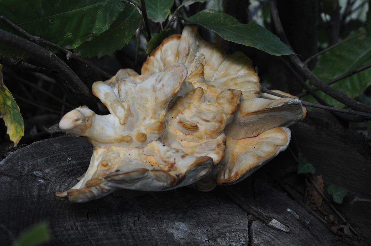 Un superbe champignon.