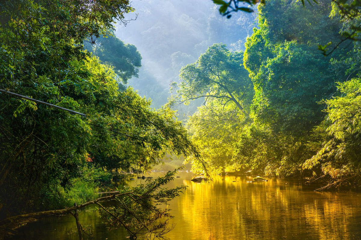 NATURE FORET RIVIERE LEVER SOLEIL BD
