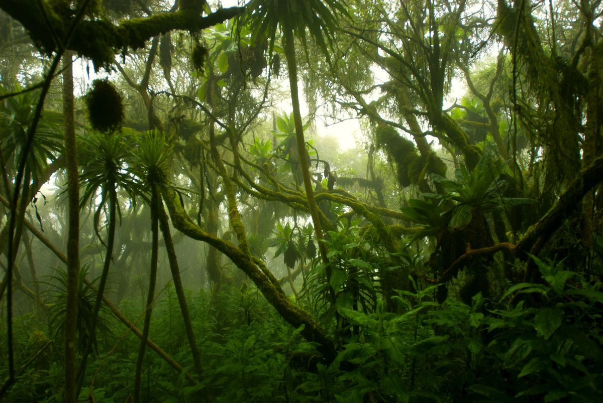 NATURE FORET SAUVAGE BRUME BD