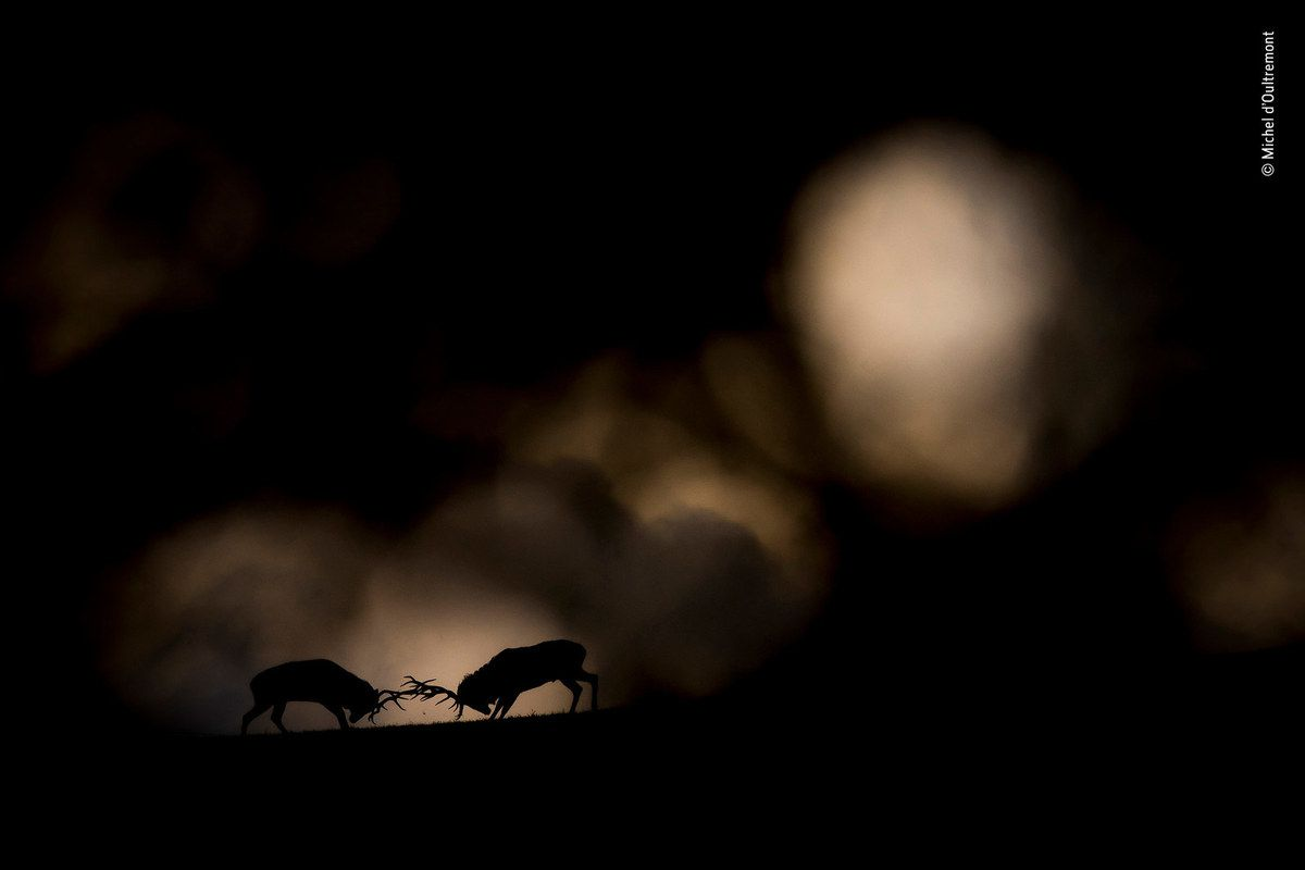 © Michel d'Oultremont - Wildlife Photographer of the Year
