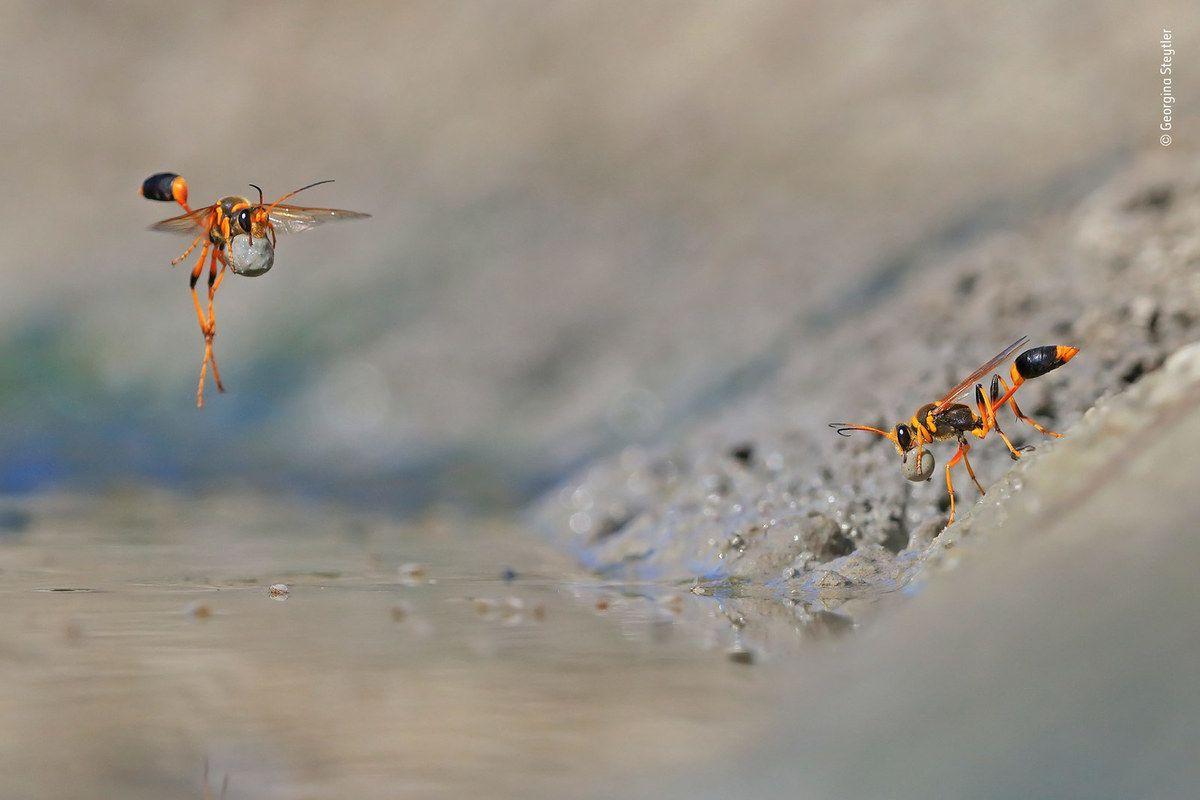© Georgina Steytler - Wildlife Photographer of the Year
