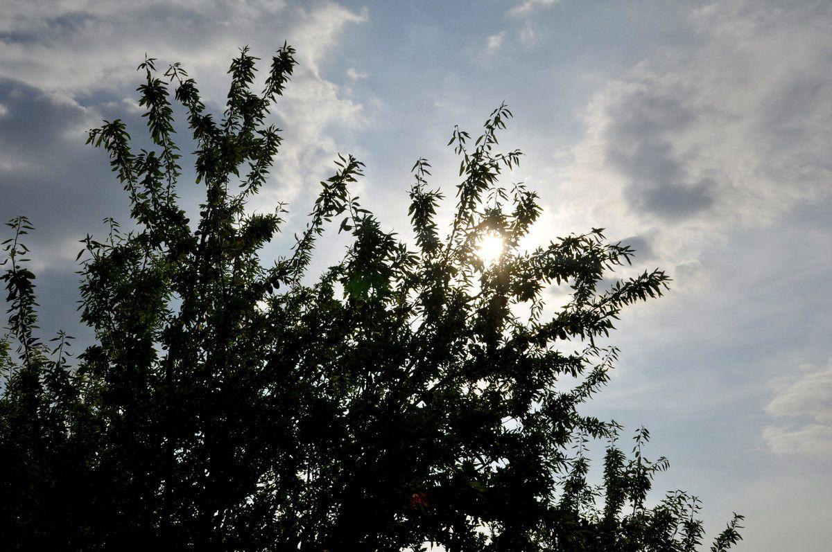 Plein soleil sur l'amande fraiche