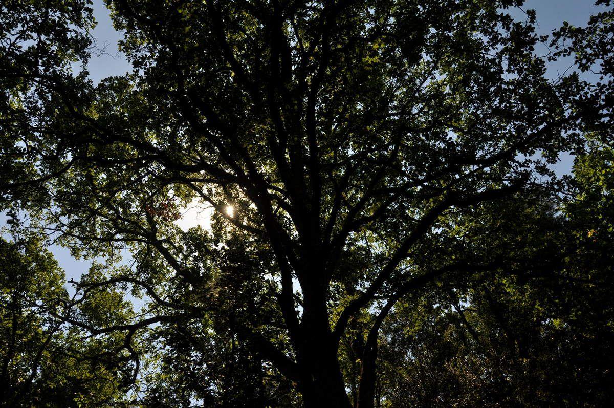 Soleil sur la forêt.