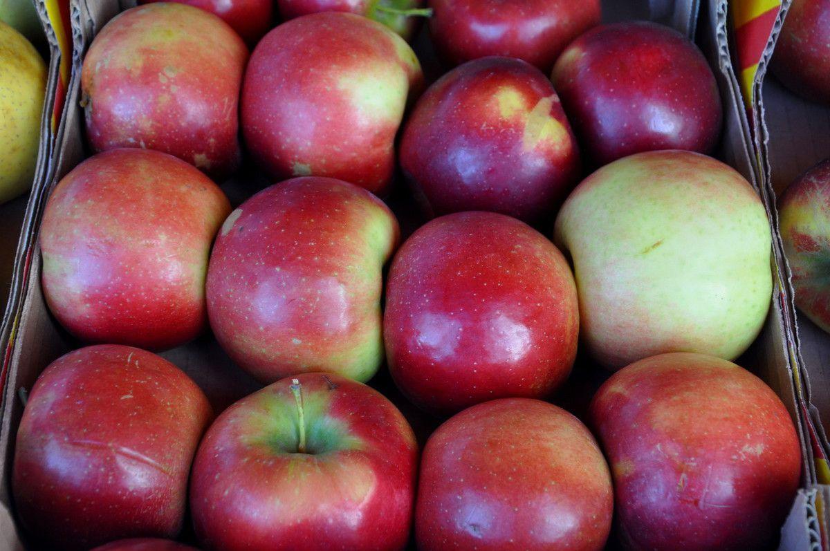 A vos agendas : 4ème fête de la pomme et du coing à Corneilla la Rivière