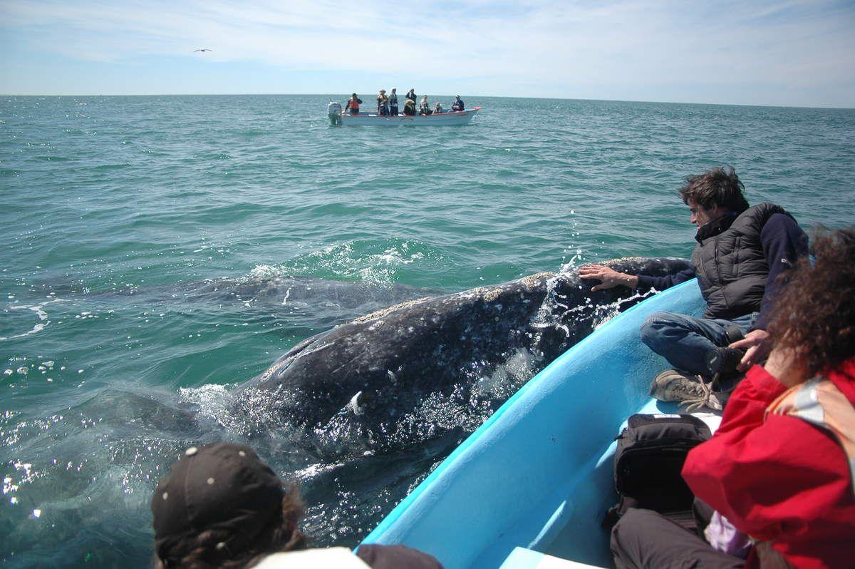 Escapade en Baja California cet hiver ?
