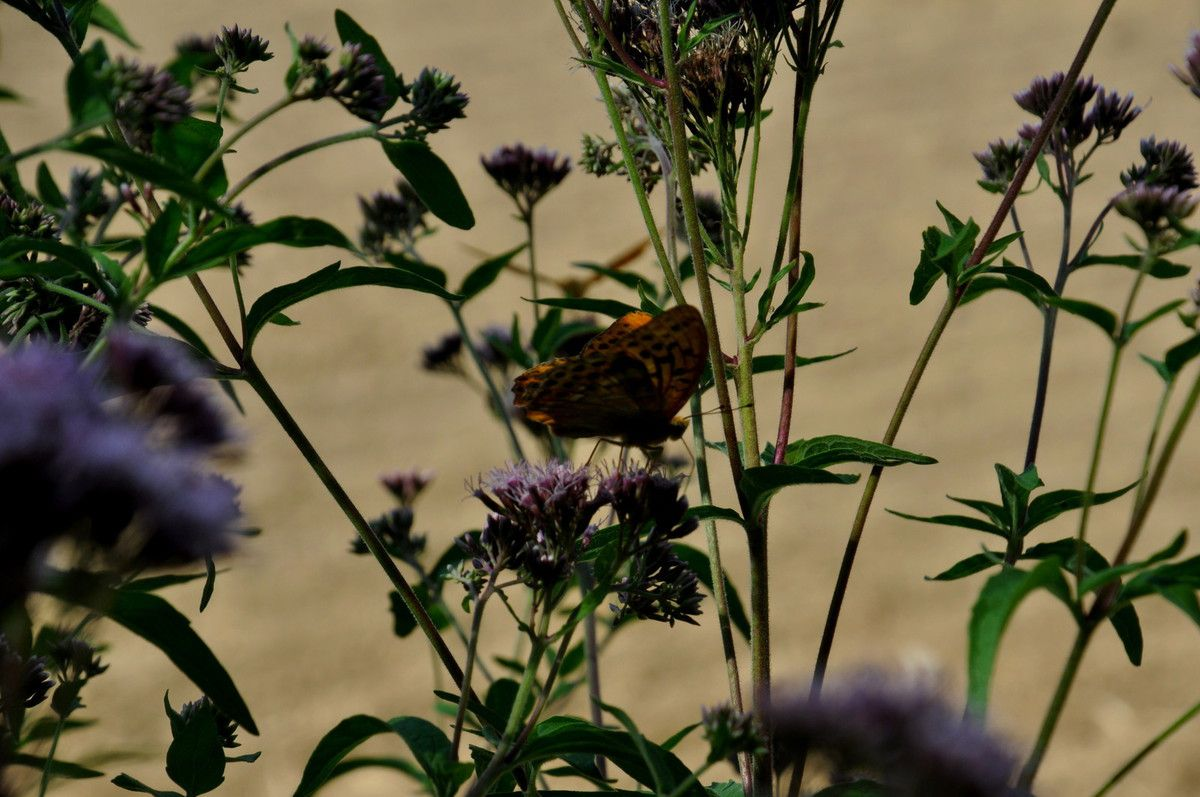 Plein de papillons ici.