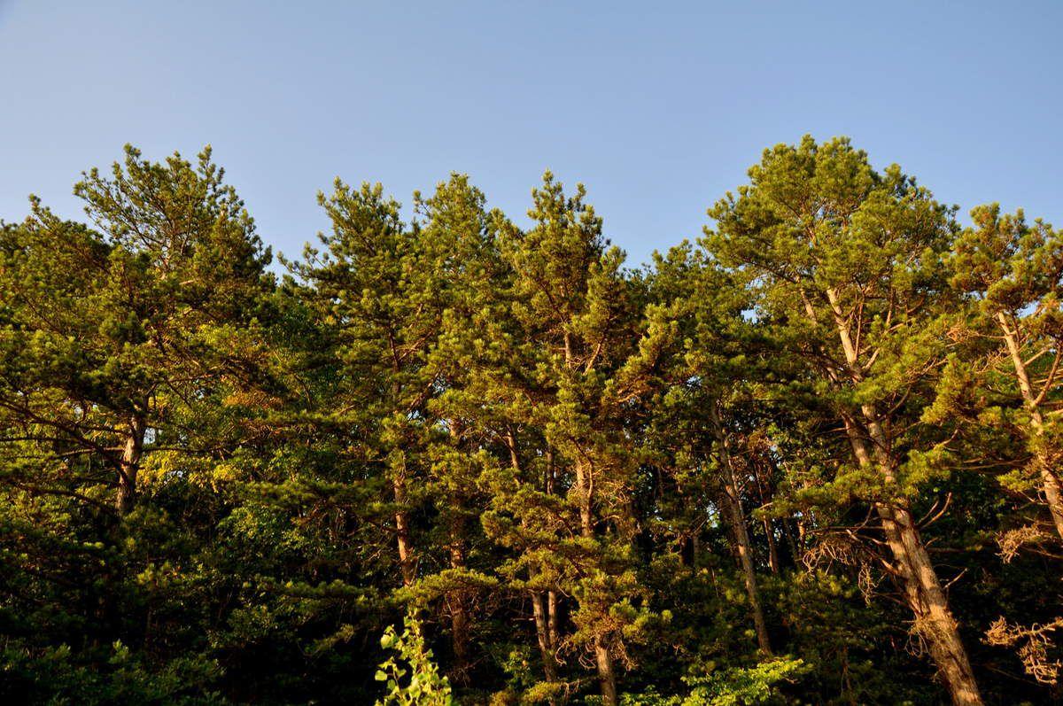 Et toujours de l'autre côté la forêt