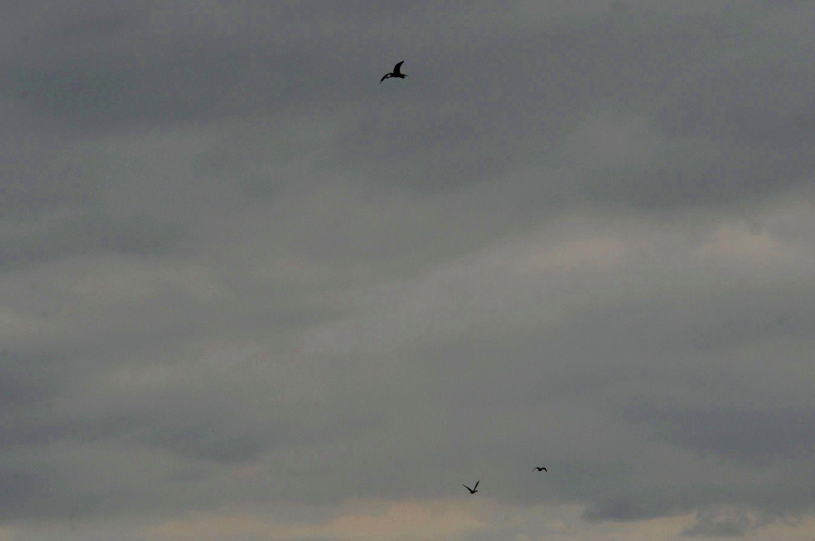 Des oiseaux passent