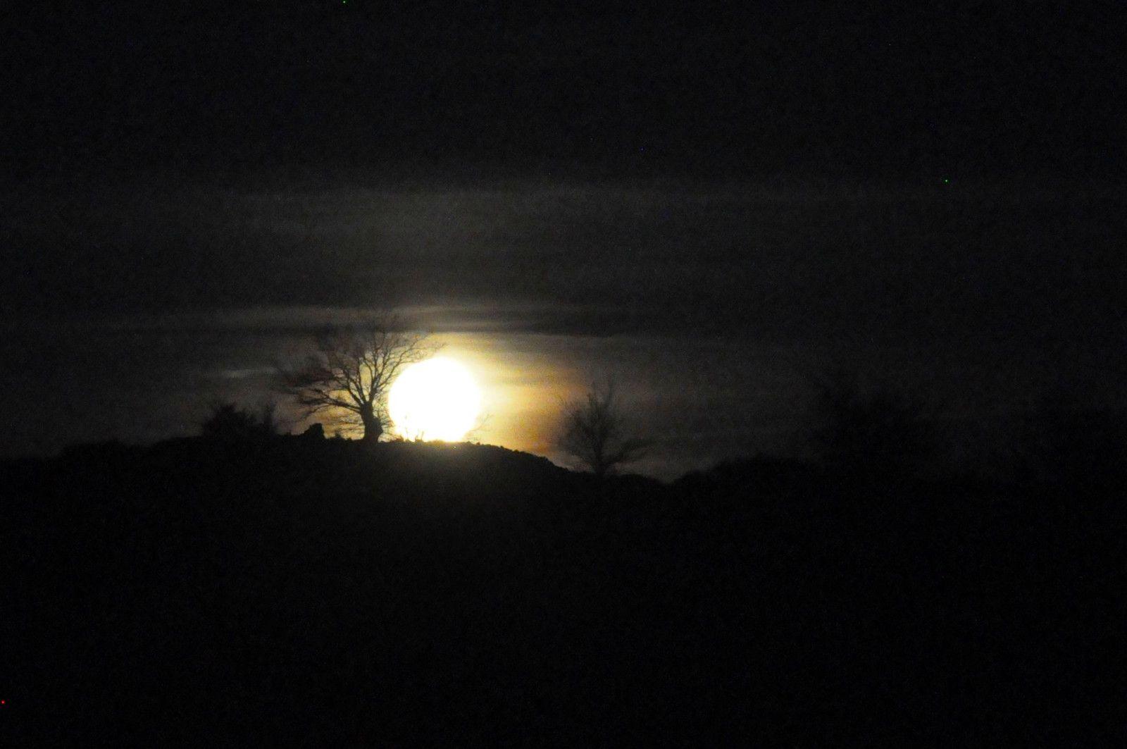 Objectif voir bien l'arbre avec la pleine lune.