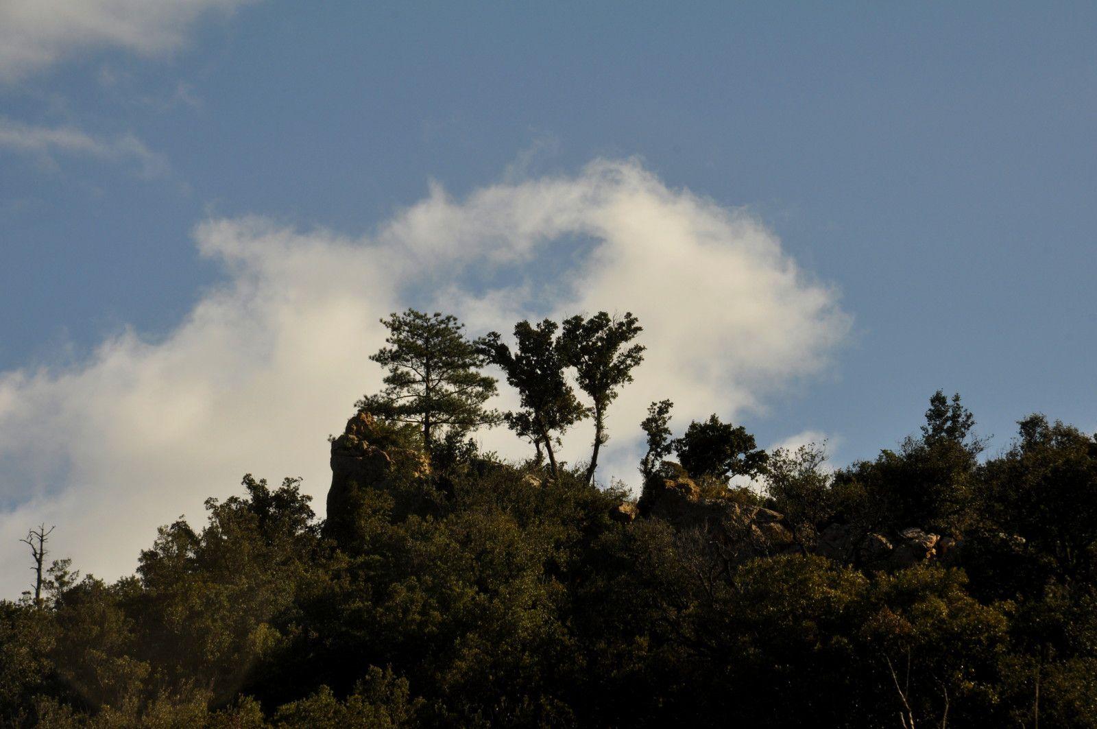 Les beaux arbres sur la crête