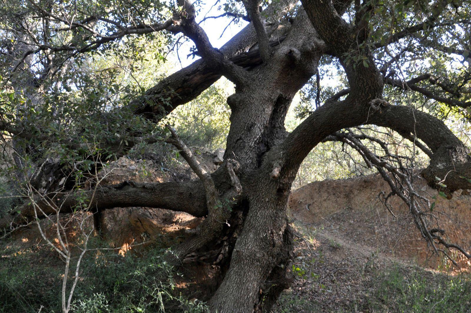 De beaux arbres