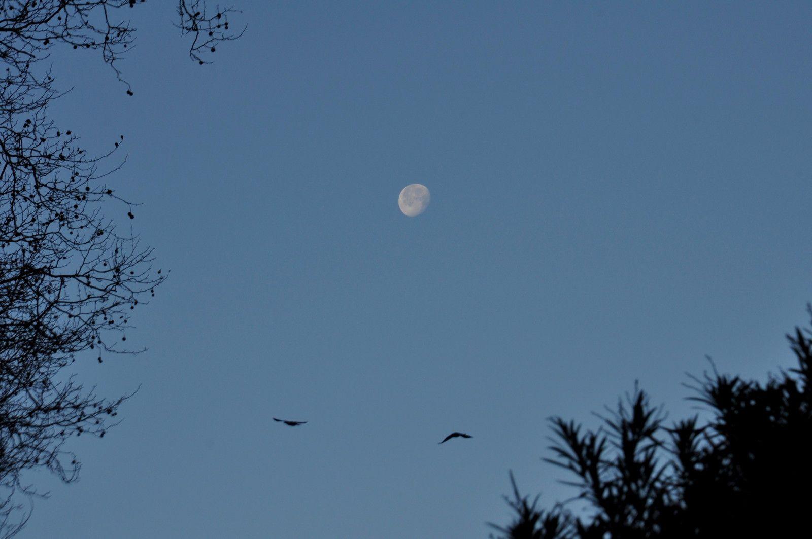 Des arbres, des oiseaux et la lune, cela donne un arrêt photo obligatoire