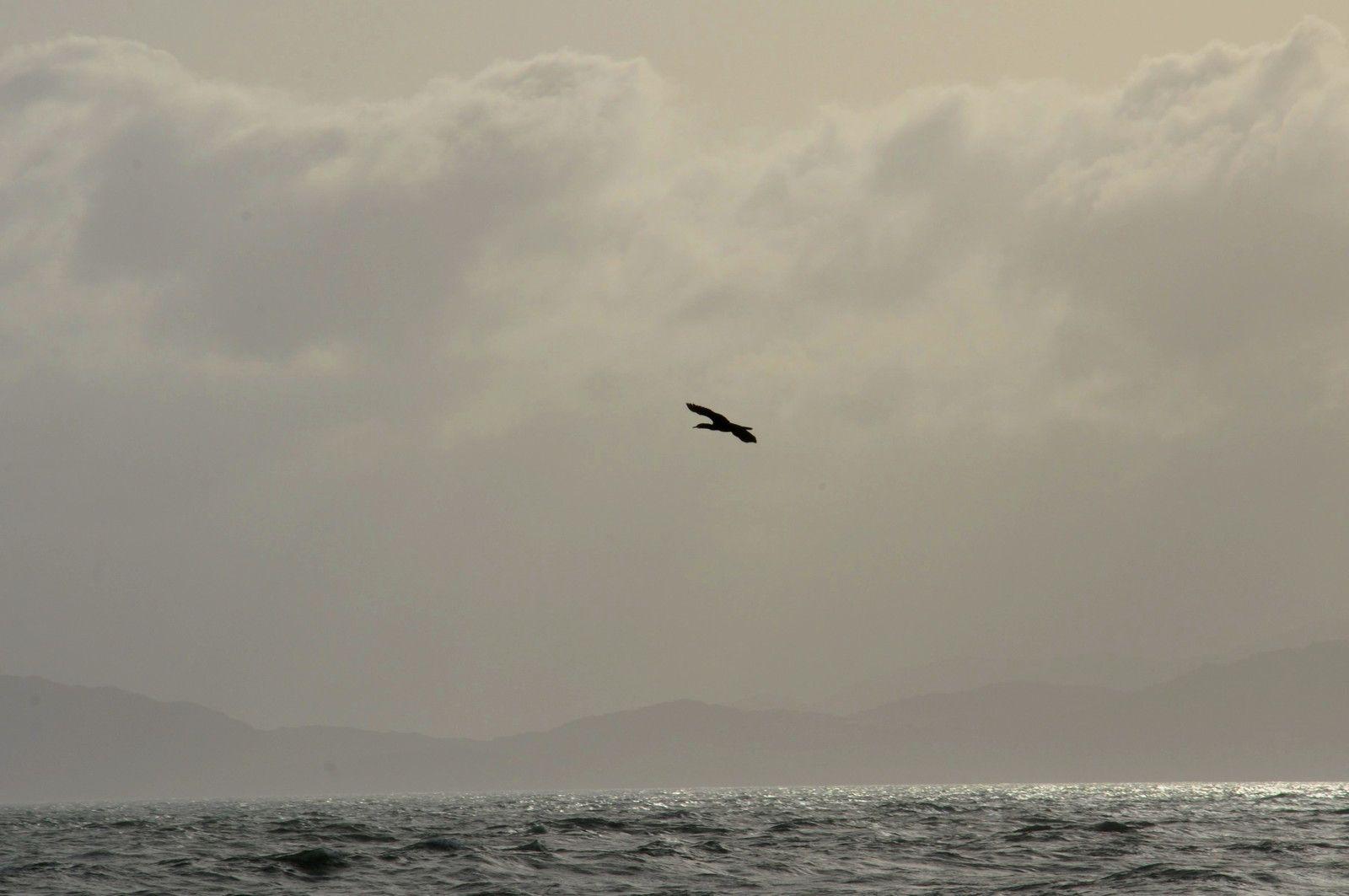 Un oiseau passe, à suivre.