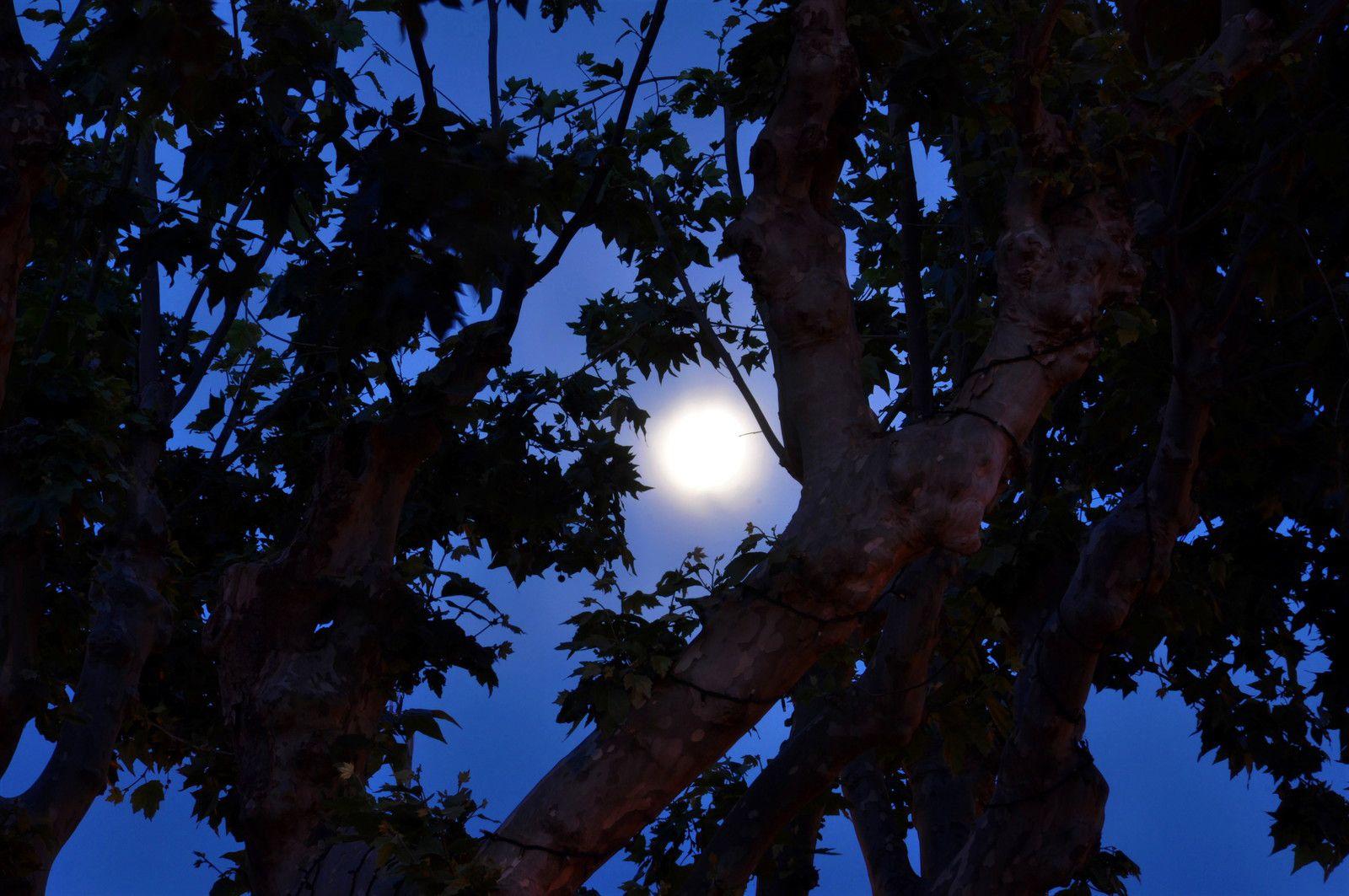 Zoom que la lune dans le platane.