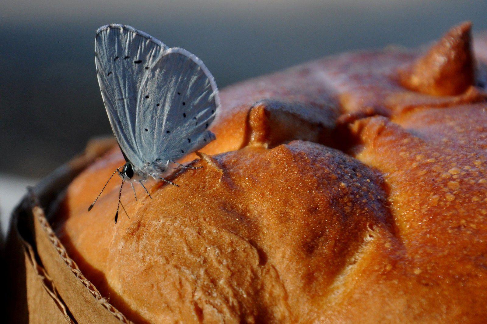 Un beau papillon en passage