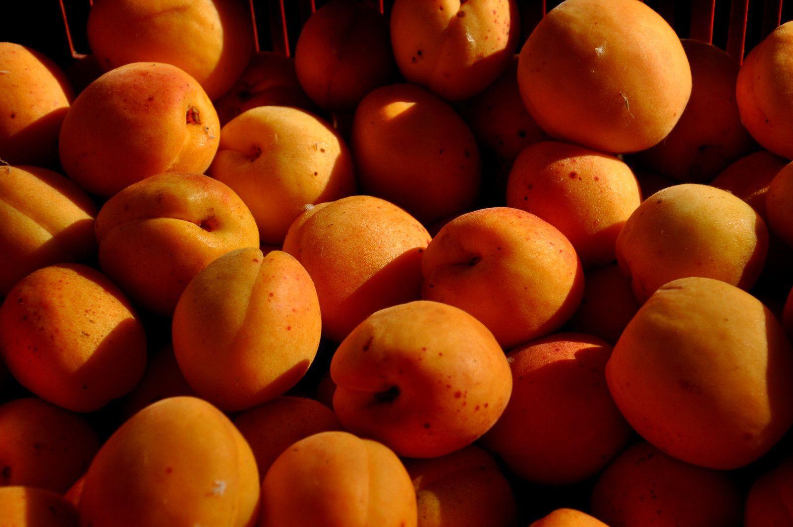 Les abricots aussi en fête.