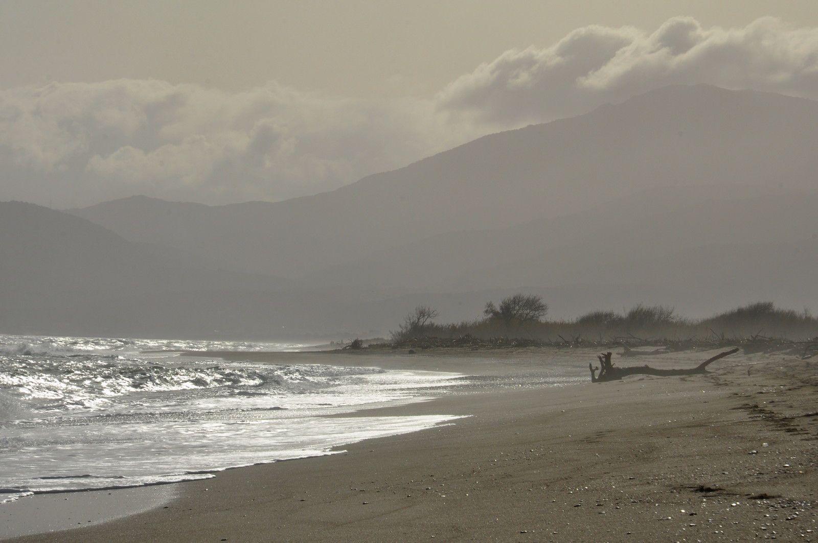 Un tronc sur la plage.