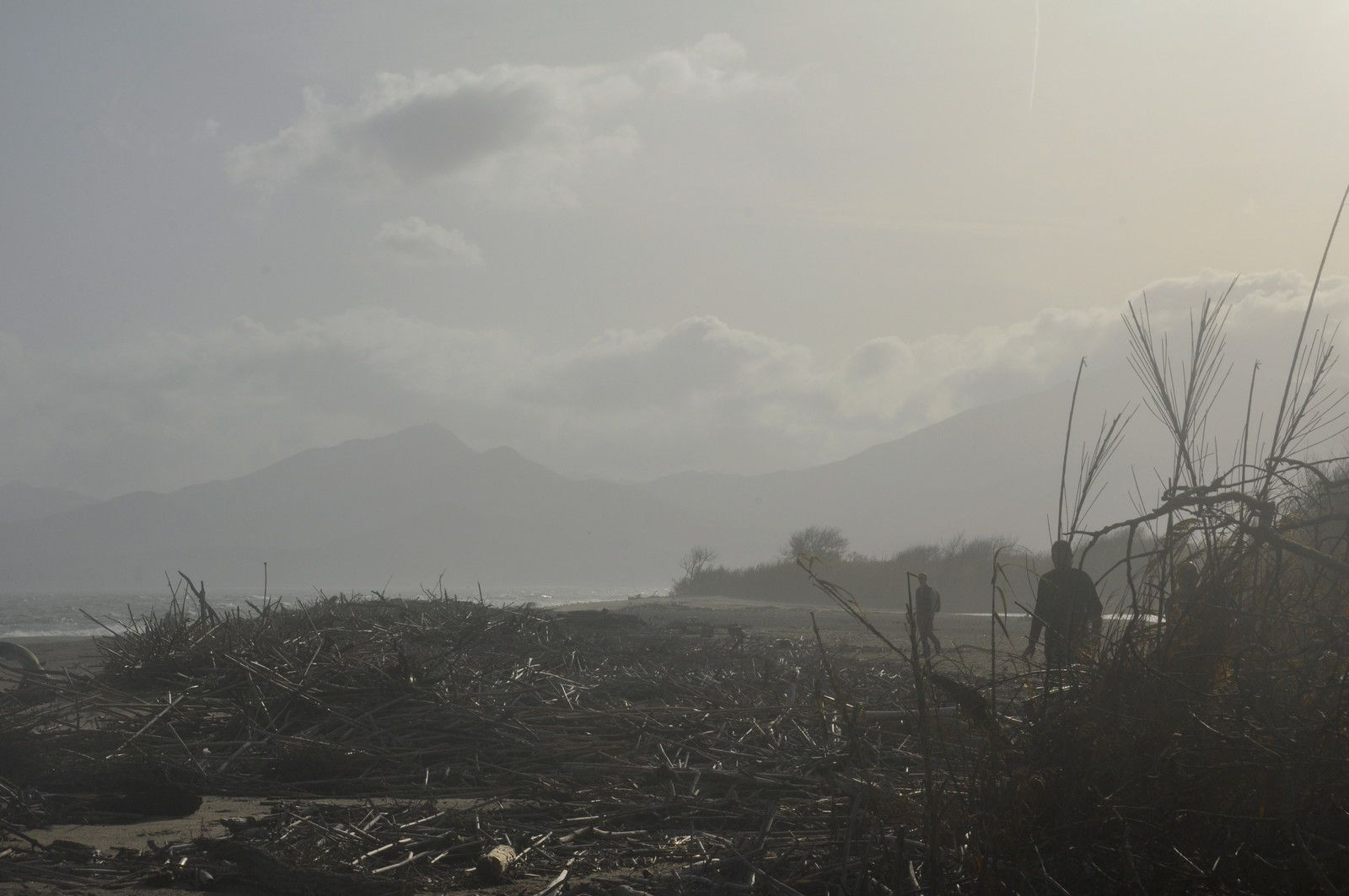 Les seules photos avec les tas de bois sur la plage après la dernière crue.