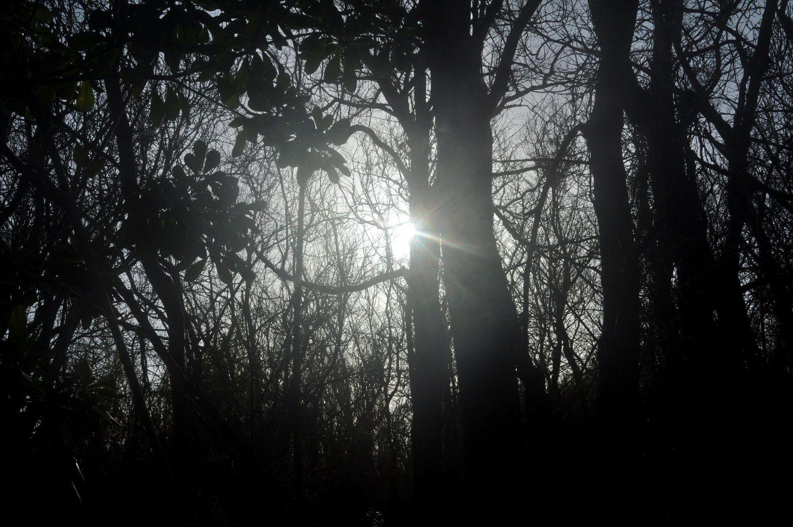 Arbres et soleil.