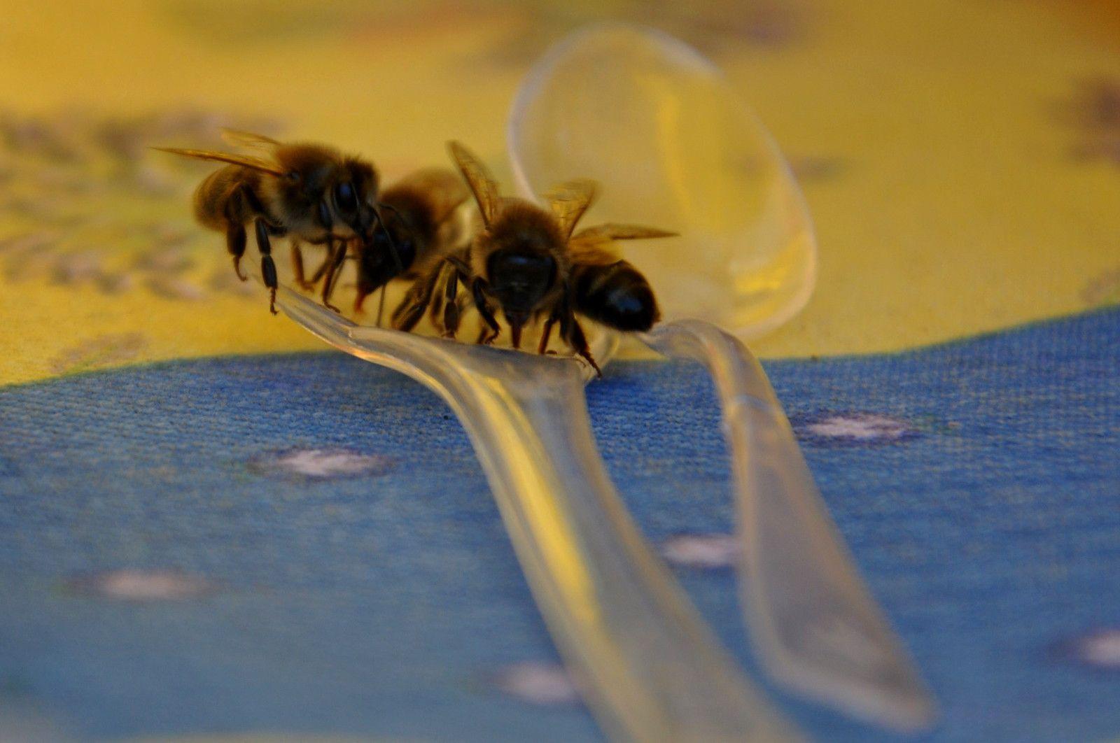 Une journée pour faire comme les abeilles une récolte d'information (pour nous).