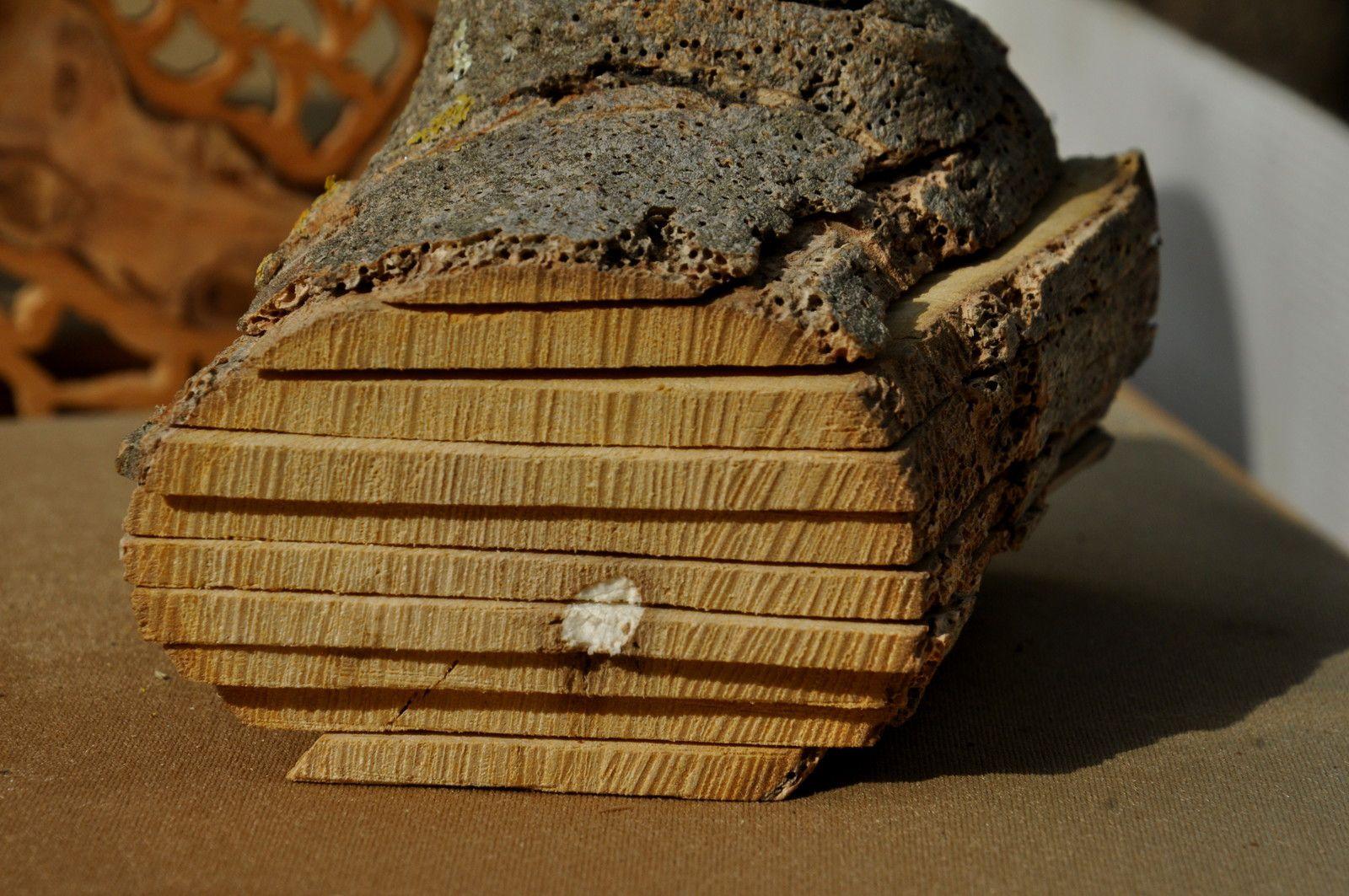 Le bois de figuier en vedette