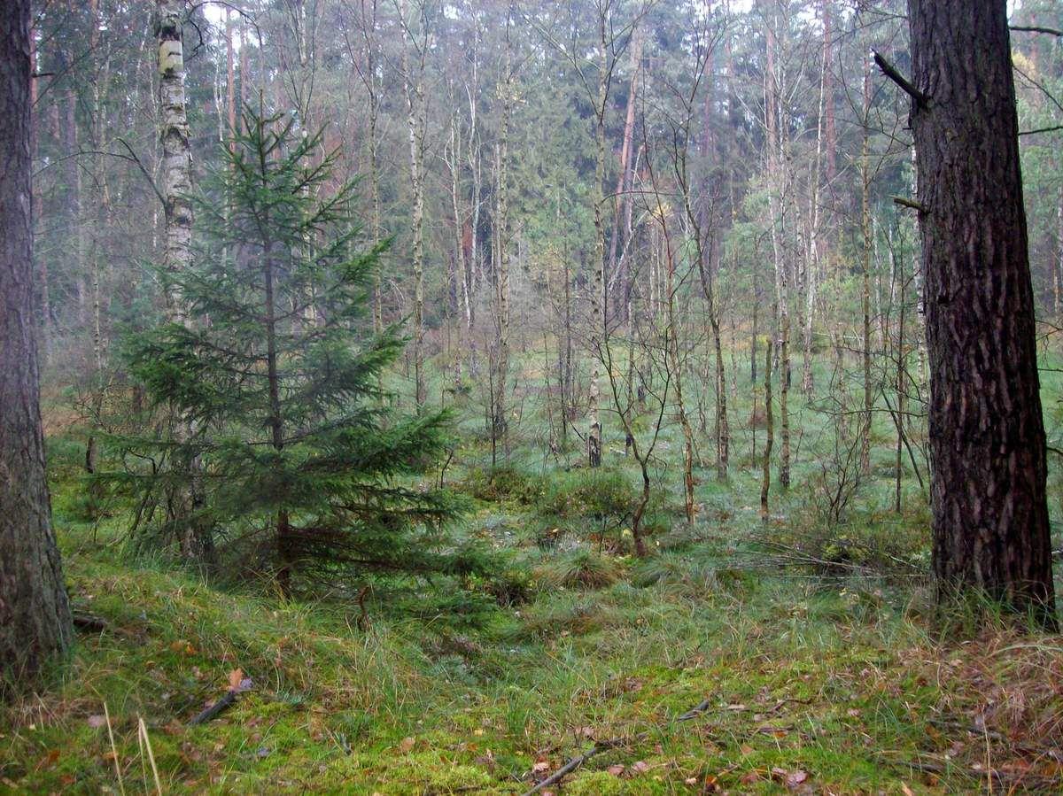Herbstwanderung zu den Grünen Kaskaden