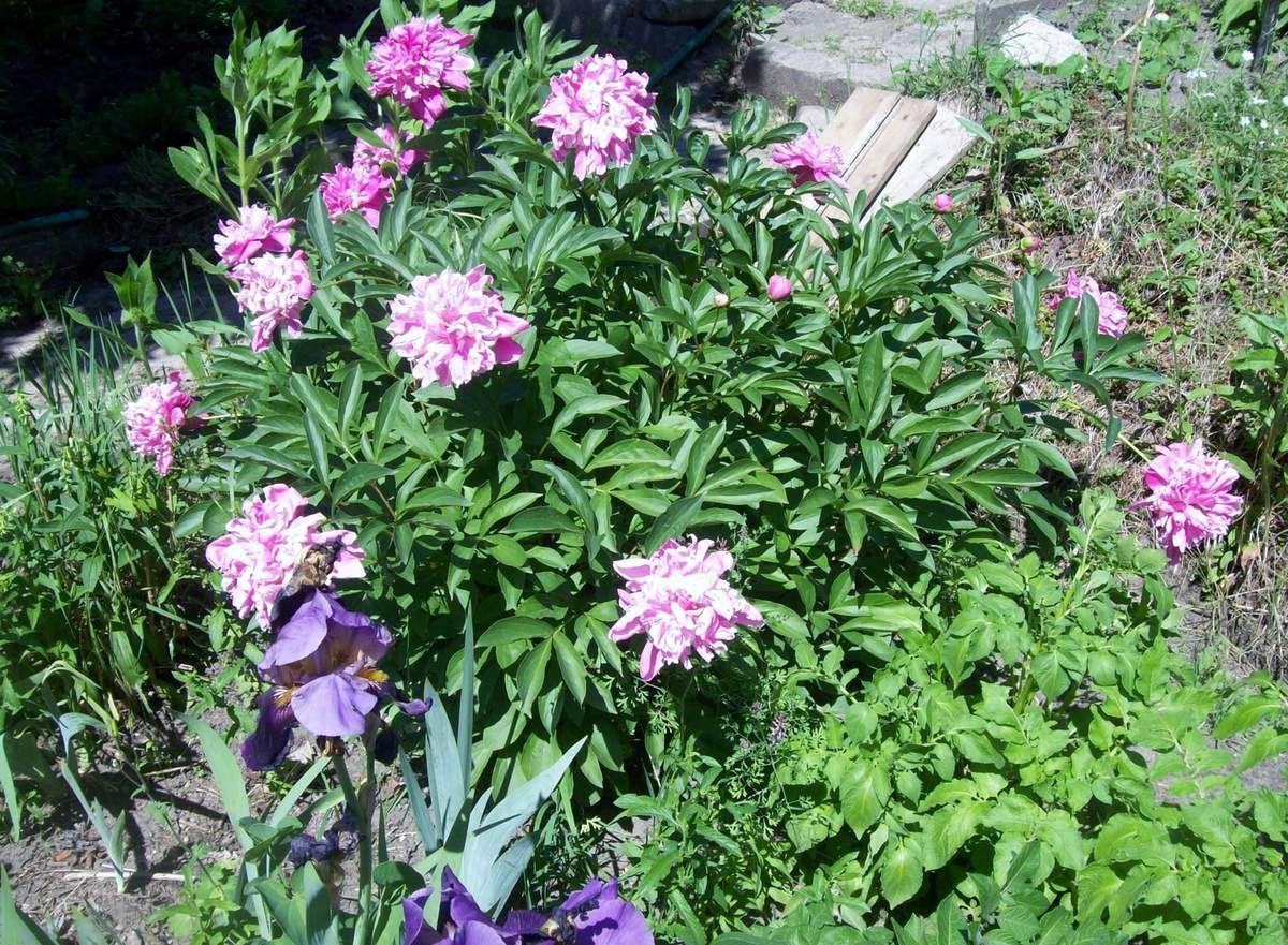 Tag der Offenen Gärten im Juni