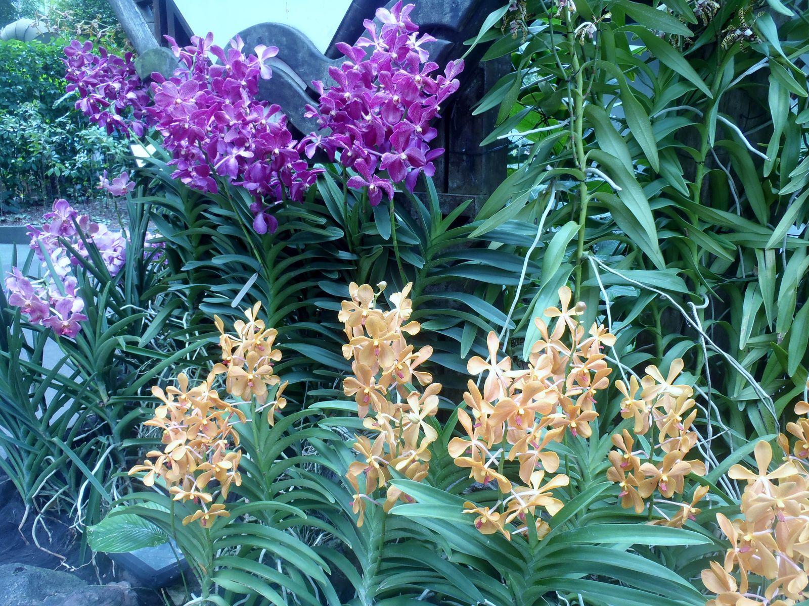 Im Orchideengarten der Botanischen Gärten von Singapur