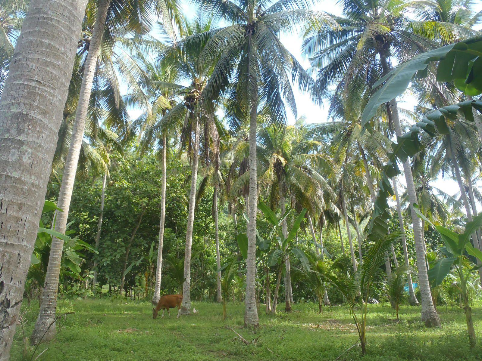 Überfahrt nach Nusa Penida
