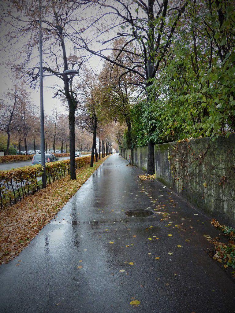 Frühling Sommer Herbst und Winter - Frühling und wieder Sommer -in der Stadtstraße (ich gehe hier jeden Tag durch)..